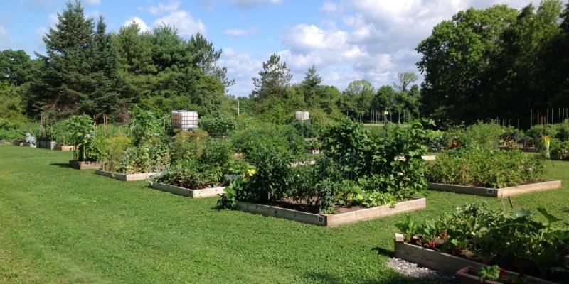 Senior Center - Join Us in the Community Garden