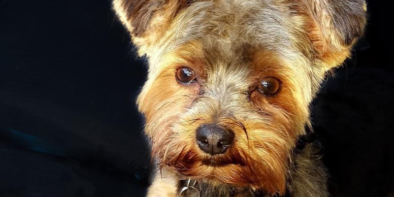 Image of Dog Face on black background